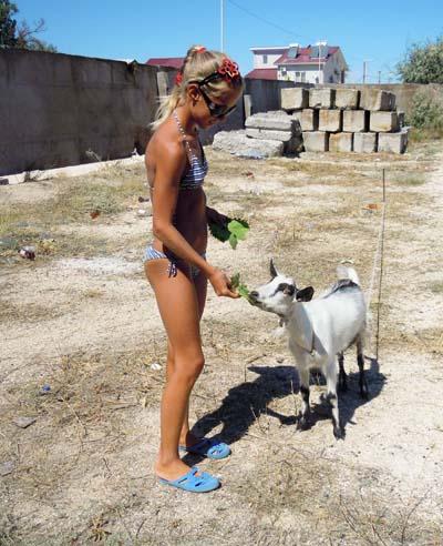 забавные козы