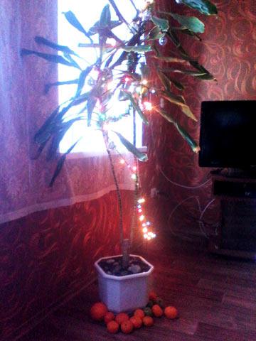 новогодняя пальма вместо ёлки